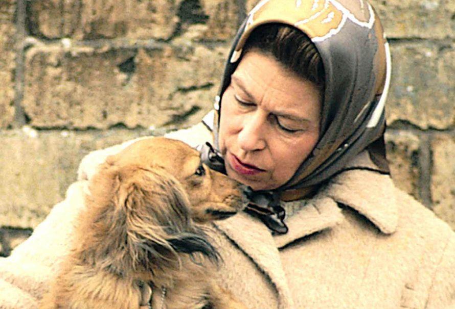 Der von der Königin adoptierte Corgi von ihrem Wildhüter ist gestorben